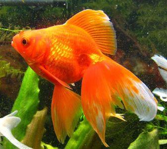 рыбки в аквариум на 30 литров фото